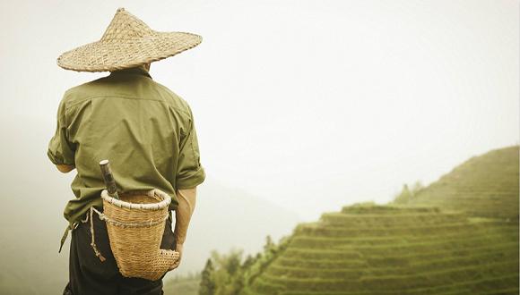 去年全国农村贫困人口减少1386万人