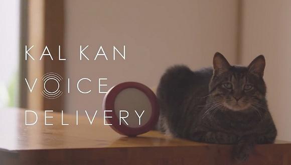 宠物食品品牌KalKan做了个实验 分开两年后猫猫还会记得主人吗?