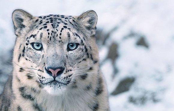 别让这些神奇动物灭绝