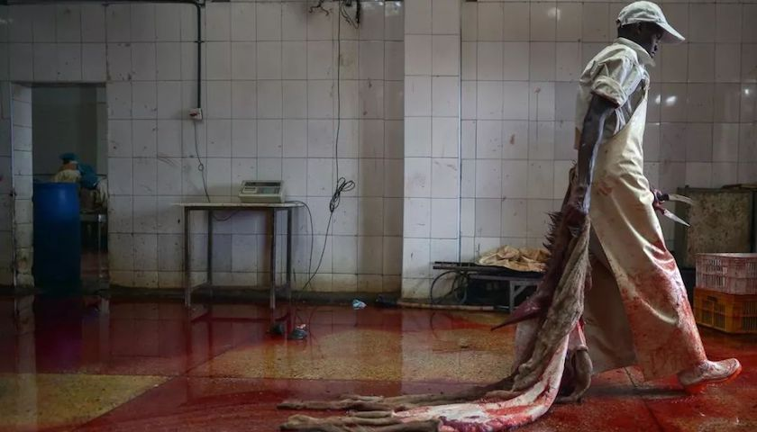国中产阶级追捧阿胶,非洲多个国家卸磨杀驴