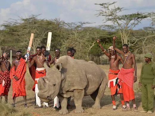 從此,世上再無雄性北白犀