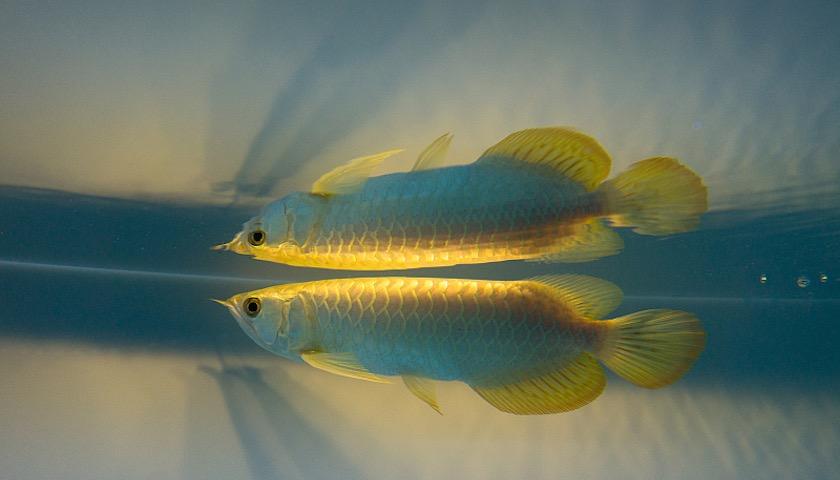 吸鱼后级电路图5