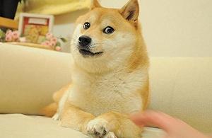 你的doge已经13岁啦
