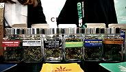 疯狂的工业大麻:有公司一棵麻苗还没有种下,股价却翻了天
