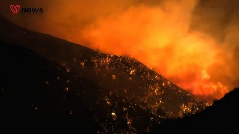 面对森林燃烧的余烬:野火真的一无是处吗?