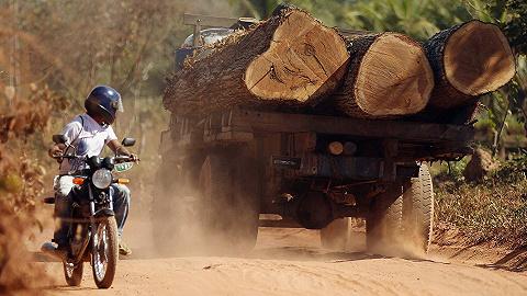 巴西亞馬孫雨林流失加速,森林砍伐地被爆違規放牧賣牛