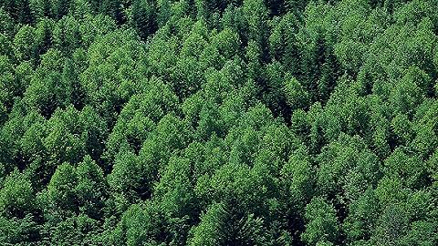 国家林业和草原局公布第三批国家森林步道名单