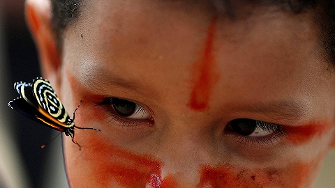 大火肆虐下 亚马孙雨林里的动物和原住民将何去何从?