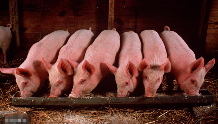 自然资源部:生猪养殖用地不需办理建设用地审批手续|界面新闻·中国