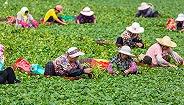 """农业农村部:培育家庭农场要防止""""垒大户"""",政府切忌搞强迫命令"""
