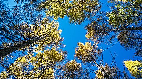 森林法解读 健全法律责任 提升执法效能