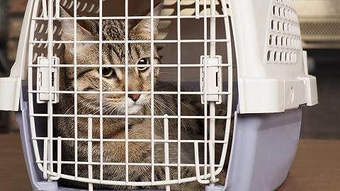 三只猫咪因感染新冠被安乐死,这事儿到底应不应该?