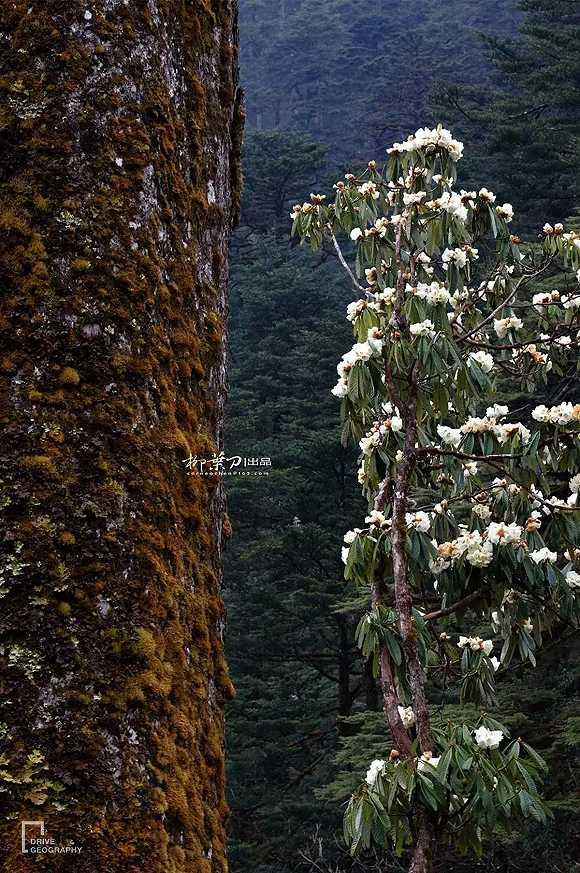 阿鲁纳恰尔邦风景图片
