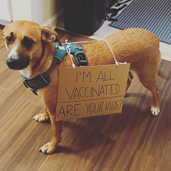 狗狗们也上街呼吁保护地球啦