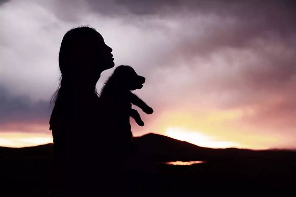 青春光线携手猫眼,电影《重返·狼群》能否杀出重围?