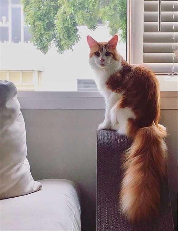 24,我家猫的尾巴好像一只小松鼠.