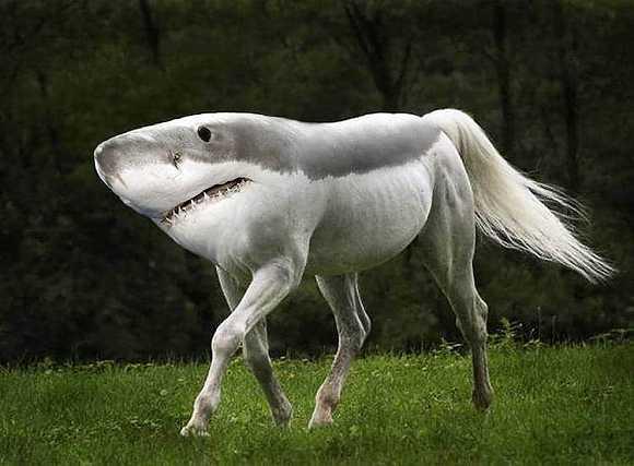 线形动物的身体呈圆筒形,体表有角