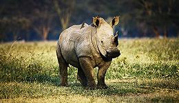 打击犀牛盗猎   中外专家肯定中国努力