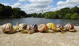 手机里的公众科学:城市里的蜗牛为什么越来越黄?