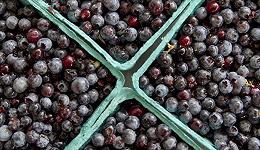 """夏威夷果和蓝莓有益健康?""""超级食物""""不过是营销噱头而已"""