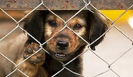"""人类如何对待动物 某种程度上反映了我们如何对待人类群体内部的""""他们"""""""