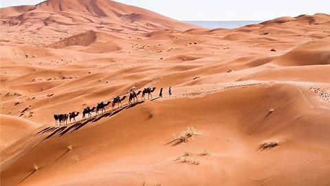 摩洛哥   2019年春节 不如从北非花园之旅开启