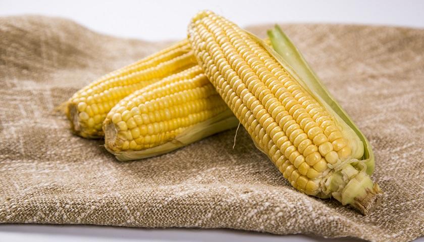 """""""中国种业第一股""""2.9亿收购同路农业,拓展玉米种子行业布局"""