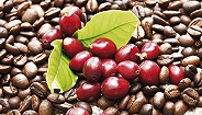 不喝咖啡会死星人慌不慌?60%咖啡树品种有灭绝风险