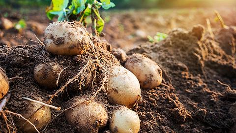 种十几亩土豆摊上大事情!百事起诉4位农民,索赔384万