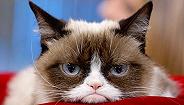 """网红""""不爽猫""""去世,赚了上亿美元的它是如何成为广告明星的?"""