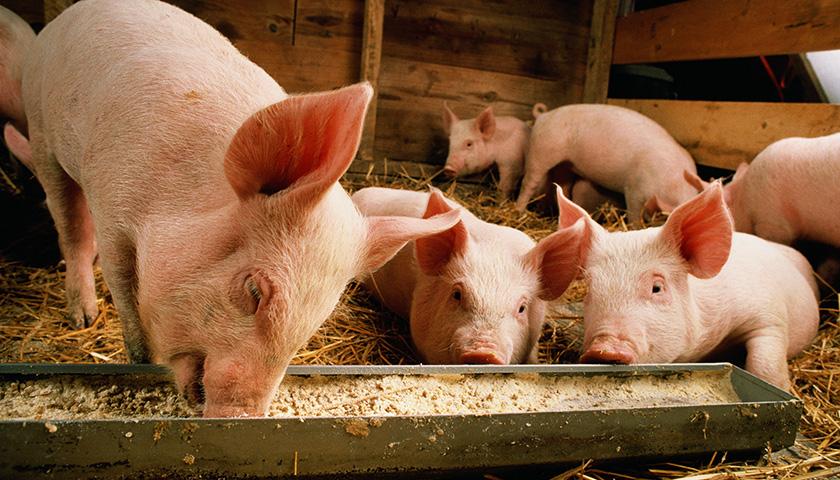 海印股份投资非洲猪瘟防治产业化项目,是商机还是投机?