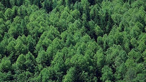 森林法修订草案提请审议,明确森林权属将有助于防止国有资产流失