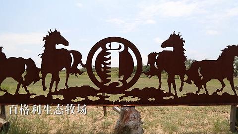 【新时代·幸福美丽新边疆】寻蒙古马记