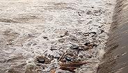 环渤海入海排污口第二批现场排查启动,将查8市1800公里海岸线