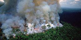 """""""地球之肺""""正面临不能承受之重,亚马孙森林大火持续燃烧16天"""