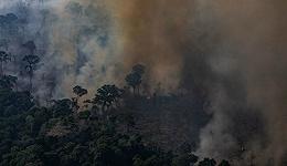 资本主义给亚马逊雨林点了一把火