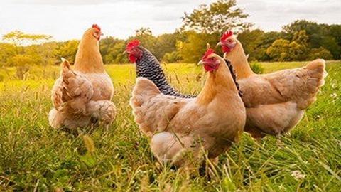 8月陕西CPI同比上涨2.5%,消费需求转向肉蛋禽替代