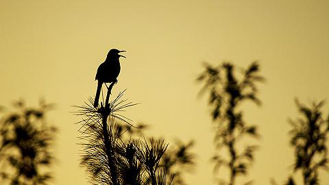 科學家首次成功向鳥類植入記憶,小鳥無師自通學會新歌