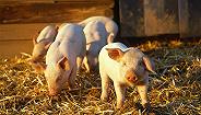直通部委|商务部预计2020年下半年生猪供给开始增加 八部门:不得向未成年人销售电子烟