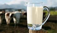 农业农村部:我国生鲜乳三聚氰胺等抽检合格率保持在100%,国产奶完全可以放心喝