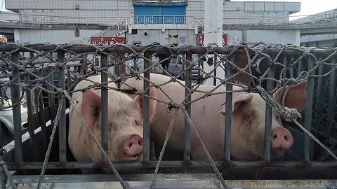 """潘向東:慎言豬價拐點,理清六個""""豬""""問題"""