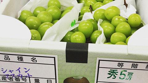 日本计划禁止将香印青提幼苗带出海外