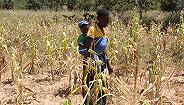 """津巴布韦陷入""""人造饥荒"""",高通胀正在让60%人口吃不上饭"""