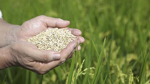 新冠疫情會引發全球糧食危機嗎?