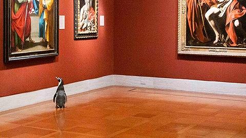 一周影像资讯丨疫情助长灵感:从参观博物馆的企鹅,到自拍时尚大片的模特