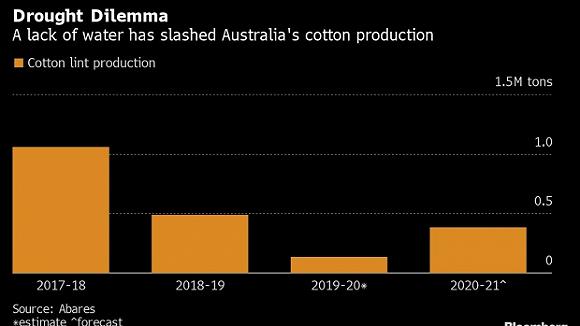 澳洲棉花种植面积锐减83%,降至40年来最低