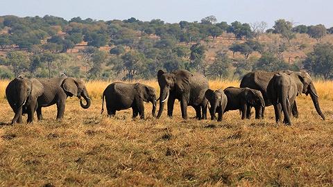 博茨瓦纳数百大象神秘死亡,专家:可能会威胁人类