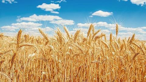 联合国粮农组织:全球食品价格回升,谷物产量将创历史新高