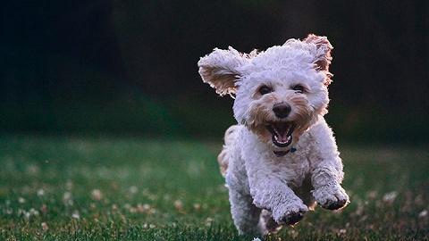 浦东警方查处上海首例养犬人遗弃宠物犬案