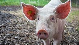 7月猪肉价格同比大涨85.7%,CPI已连续两月上升